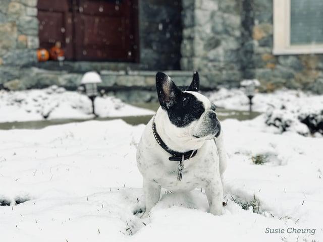 Puppy in snow.jpg